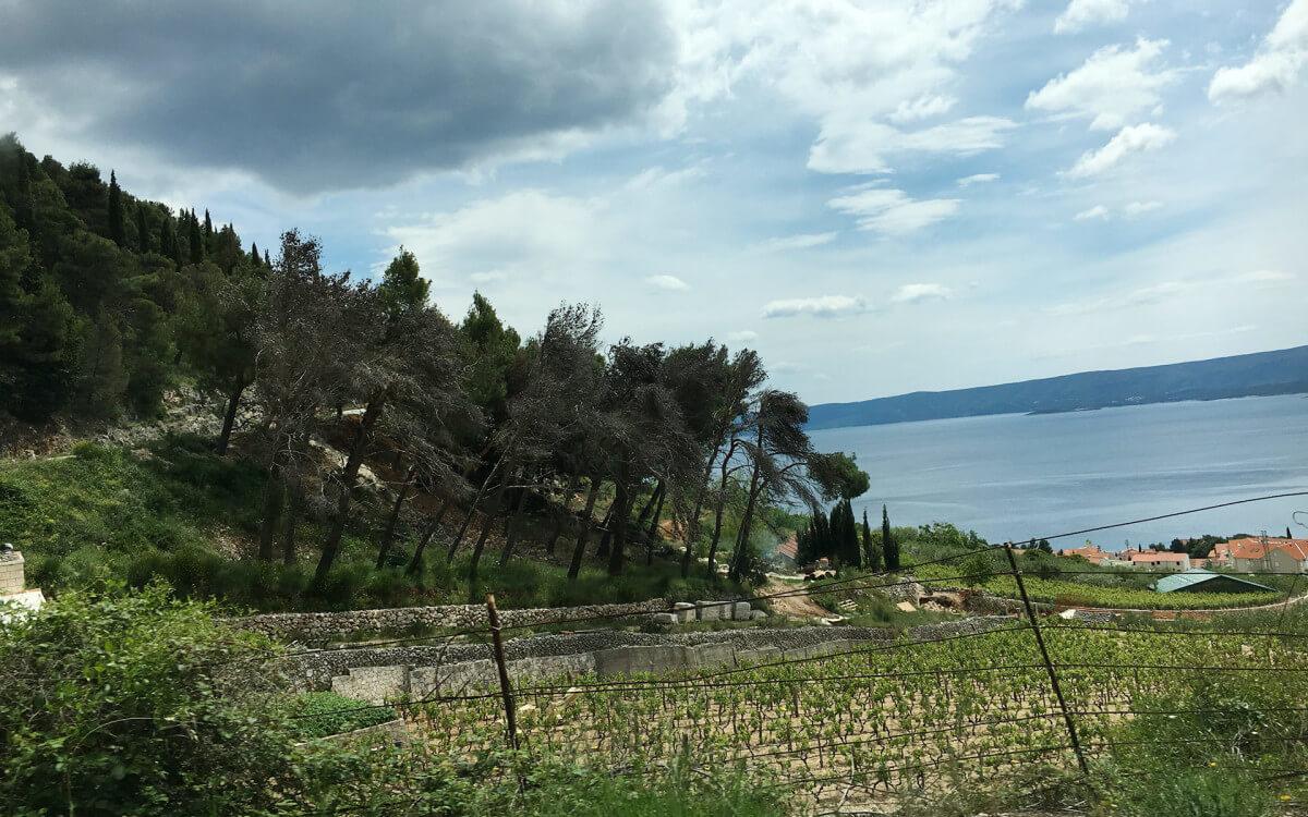 dubrovnik-wine-tasting