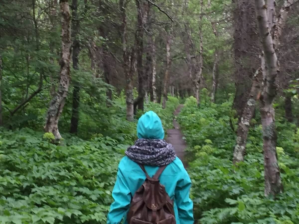 A walk in the woods of Iceland